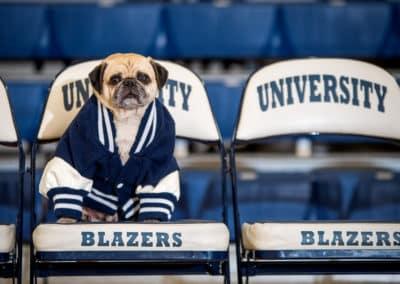 Hank the Trailblazer, Official Unofficial Mascot